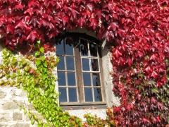 Fenêtre fleurie.jpg