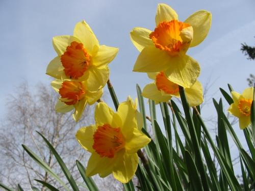 Fleurs 966 (4).jpg
