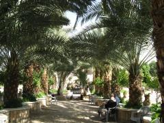 ISRAEL 2009 468.jpg